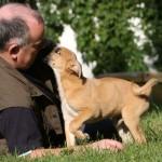 auch kleine Hunde kommen mit richtigem Training groß raus