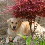 Amy liebt ihren Garten